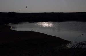 E20-1412-06-1952 Birds Over the Water | Fine art photograph by Smadar Barnea