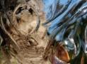 עץ החיים | יצירות מאירות קהילה זוכרת כפר סבא | צילום אמנותי | סמדר ברנע | E20-1402-9928