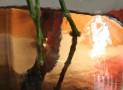 מבט על אגרטל פרחים עם מים | צילום סמדר ברנע | E20-120504-3541