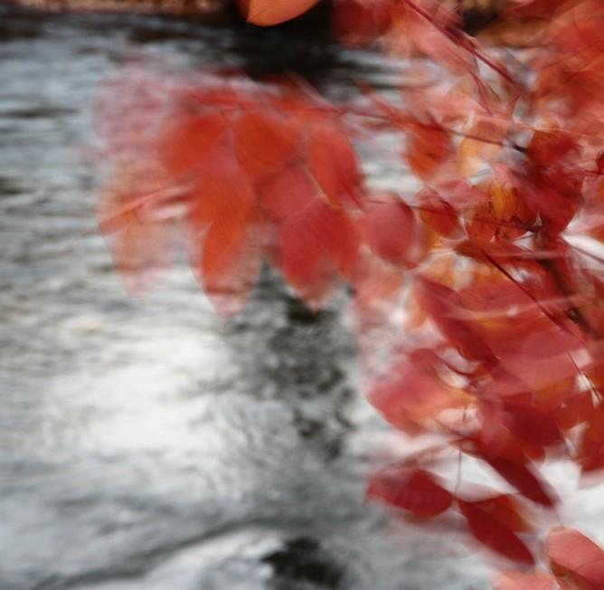 Autumn - fine art photograph by smadar Barnea | cat# E20-1401-03-9862